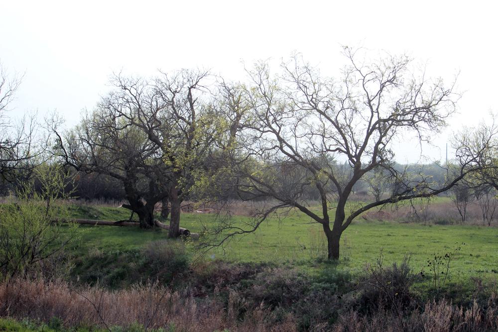 Trails-at-Bacacita-Farms-Abilene