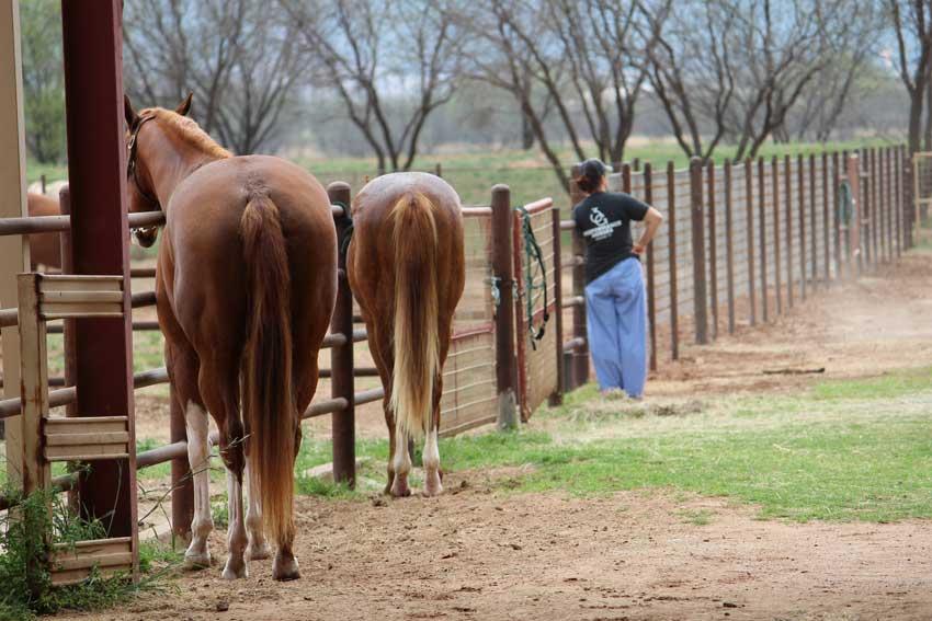 horses-bacaita-farms-south-barn