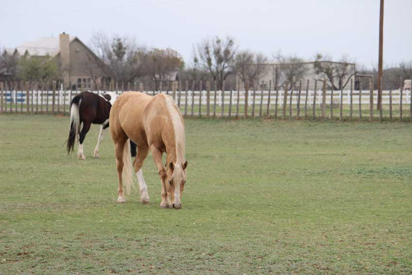 horses-pasture-bacacita-farms