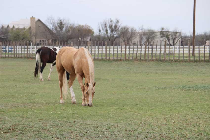 horses-pasture-bacacita-farms